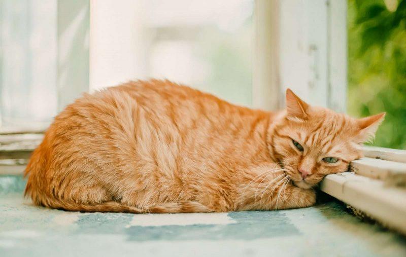 gatto che dorme in una giornata di sole