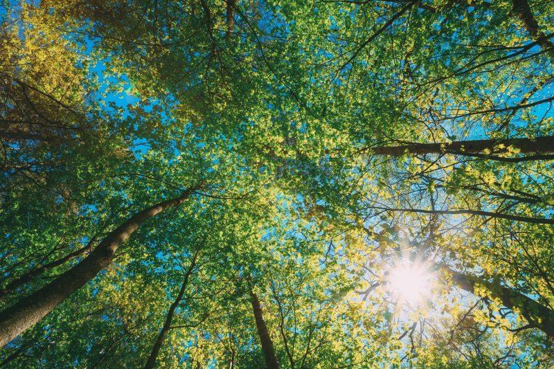 foresta luminosa